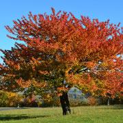 Herbst in seinen schönsten Farben