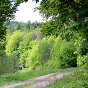 Frühling im Lüdersdorfer Wald