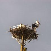 Nouveau nid de cigognes - Avril 2013