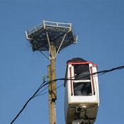 Nouveau nid de cigognes - Mars 2013