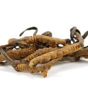Cordyceps sinesis - Chinesischer Raupenpilz © Norman Chan - Fotolia.com