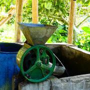 La machine quitte ensuite le miel collé au grain de café car toxique