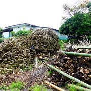 Troncs des caféiers morts stockés dans une ferme de café