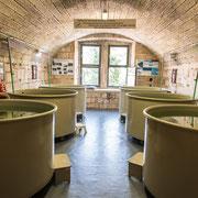 Aquarium - Schildkröten Schutzstation