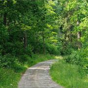 Luftfeucher, artenreicher Waldweg mit Salweide (Thüringen)