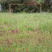 Orchideenwiese, Kavran