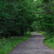 Waldweg mit teilweise geschlossenem Konendach und kleinen Espenbeständen