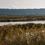 Salzfelder von Secovlje