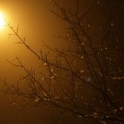Nebelschwaden. Hasslinghausen