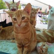 1 Katze in Spanien über Tierhof Stade eV