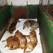 1 Hund im Tierheim Ploiesti, Rumänien über Pro Dog Romania eV