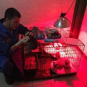 1 Katze und 1 Kater in Abakan/Sibirien über Tierhilfe Bluemoon & Pfötchenfreunde eV