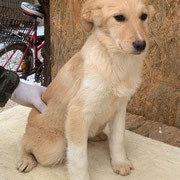 1 Tier in Rumänien durch Namenspatenschaft Ivory, Pro Dog Romania eV
