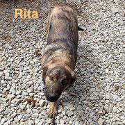 1 Tier in Rumänien durch Namenspatenschaft Rita, Pro Dog Romania eV