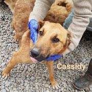 1 Tier in Rumänien durch Namenspatenschaft Cassidy, Pro Dog Romania eV