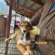 1 Tier in Rumänien durch Namenspatenschaft Aurora, Pro Dog Romania eV