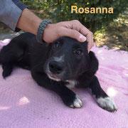 1 Tier in Rumänien durch Namenspatenschaft Rosanna, Pro Dog Romania eV