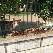 9 Streunerkatzen in Antalya/Türkei über Tierfreunde Antalya