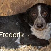 1 Tier in Rumänien durch Namenspatenschaft Frederik Pro Dog Romania eV