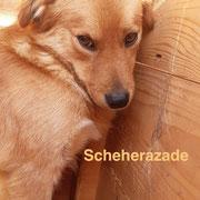 1 Tier in Rumänien durch Namenspatenschaft Scheherazade, Pro Dog Romania eV