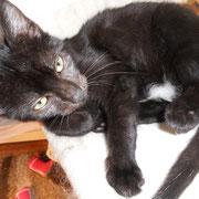 Katze Ostfriesenpaula, Katzenhilfe Yuma & Co, Nagold