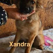 1 Tier in Rumänien durch Namenspatenschaft Xandra, Pro Dog Romania eV