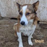 1 Tier in Rumänien durch Namenspatenschaft Inuit, Pro Dog Romania eV