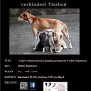 1 Hund in Rumänien über Salvate Canes eV