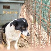 1 Tier in Rumänien durch Namenspatenschaft Roxanne, Pro Dog Romania eV