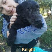 1 Tier in Rumänien durch Namenspatenschaft Knight, Pro Dog Romania eV