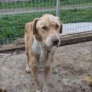 1 Tier in Rumänien durch Namenspatenschaft Connery, Pro Dog Romania eV