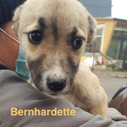 1 Tier in Rumänien durch Namenspatenschaft Bernhardette, Pro Dog Romania eV