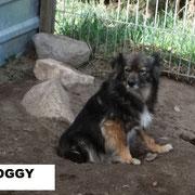 Rüde Oggy aus Polen, Not-Hund, Beselich