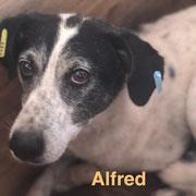 1 Tier in Rumänien durch Namenspatenschaft Alfred, Pro Dog Romania eV