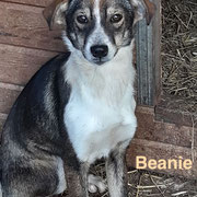 1 Tier in Rumänien durch Namenspatenschaft Beanie, Pro Dog Romania eV
