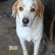 1 Tier in Rumänien durch Namenspatenschaft Bill, Pro Dog Romania eV