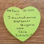3 Tiere in Ungarn über Zuflucht für Notboxer eV