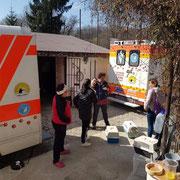 6 Tiere in Rumänien über Tierhilfe Hoffnung eV