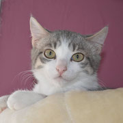 Kater Zumba, Katzenhilfe Yuma & Co, Nagold