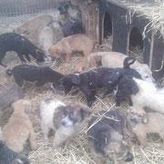 10 Hunde in Rumänien, Pro Dog Romania eV