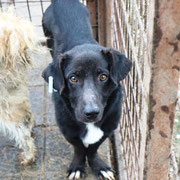 1 Tier in Rumänien durch Namenspatenschaft Paul Pro Dog Romania eV