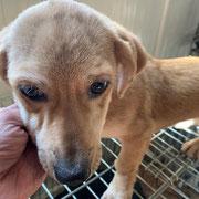 1 Tier in Rumänien durch Namenspatenschaft Nalle, Pro Dog Romania eV
