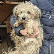 1 Tier in Rumänien durch Namenspatenschaft Alira, Pro Dog Romania eV