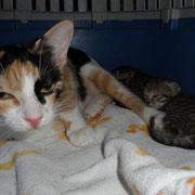 Katze Gretel, Tierhilfe Antalya eV, Türkei