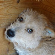 1 Tier in Rumänien durch Namenspatenschaft Aspen, Pro Dog Romania eV