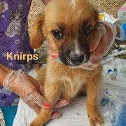 1 Tier in Rumänien durch Namenspatenschaft Knirps, Pro Dog Romania eV