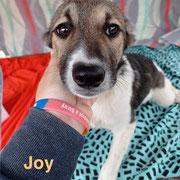 1 Tier in Rumänien durch Namenspatenschaft Joy, Pro Dog Romania eV