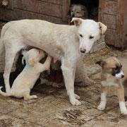 4 Hunde im Tierheim Bucov in Ploiesti/Rumänien über Pro Dog Romania eV
