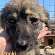 1 Tier in Rumänien durch Namenspatenschaft Mecki, Pro Dog Romania eV