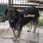 1 Tier in Rumänien durch Namenspatenschaft Luther, Pro Dog Romania eV